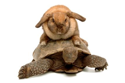 tortoise and hare slow and fast